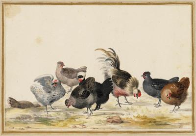 Een haan en zeven kippen