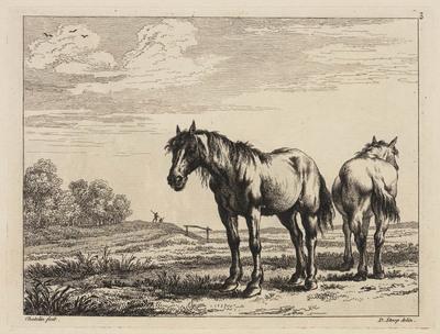 Twee paarden in de wei (Book of Horses)