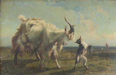 Witte geit met jong in weiland