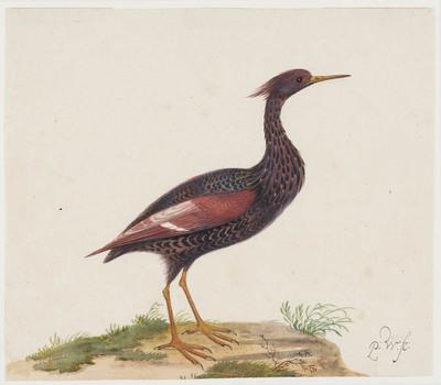 Exotische vogel (vrouwtje)