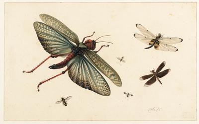 Zes vliegende Insekten