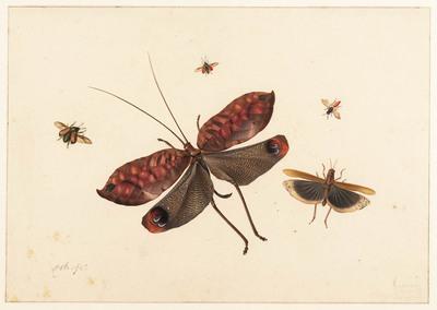 Vijf vliegende Insekten