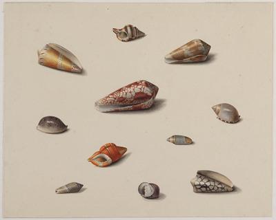 Elf schelpen van zeeslakken