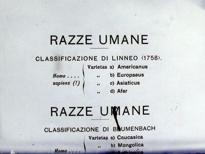 Image from object titled Razze umane. Classificazione di Linneo (1758)