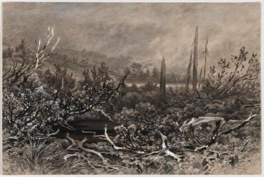 Hochmoor im Böhmerwald - Weitfällerfilz bei Mader