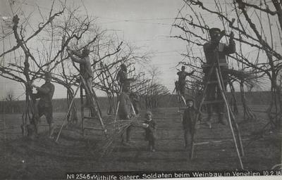 Image from object titled Mithilfe der österreichischen Soldaten beim Weinbau in Venetien; Vineyard work with Austrian soldiers helping in Veneto