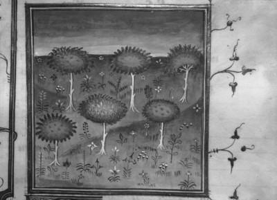 Livre des propriétés des choses / De propriétés rerum — Beginn des 17. Buches: ... des arbres et des herbes et de leur nature et proprietes, Folio fol. 299