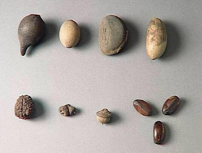 échantillon végétal