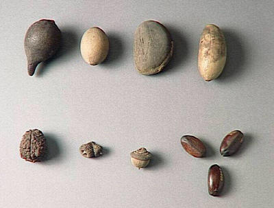 échantillon végétal (lot)