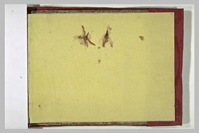 herbier ; album ; Fleurs séchées