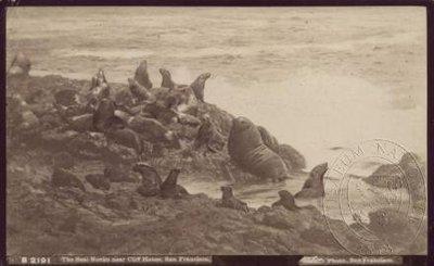 Lachtani na útesech Seal Rocks