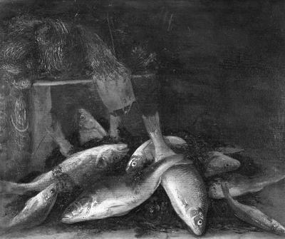 Zoetwatervissen 1