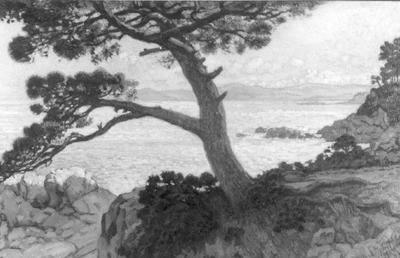 Paysage (le pin de la Fossette)