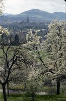 Image from object titled Freiburg i. Br.: Frühling an der Eichhalde: Blüten und Blick auf das Münster