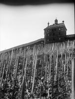 Image from object titled Esslingen: Weinberg mit Wehrmauer
