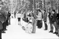 Image from object titled Todtmoos: Schlittenhunderennen; Pulka mit einem Hund und Langlaufski am Start
