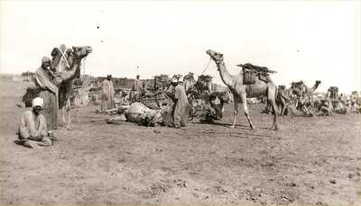 Photograph of camel train resting from effects of James Ryan