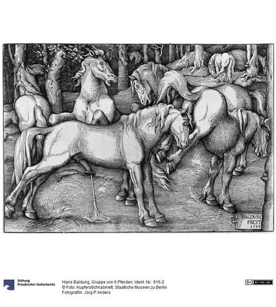 Gruppe von 6 Pferden