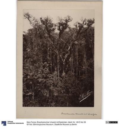 Brasilianischer Urwald mit Epiphyten