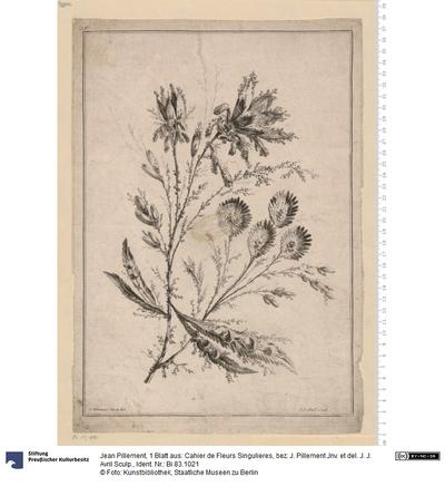 1 Blatt aus: Cahier de Fleurs Singulieres, bez: J. Pillement Jnv. et del. J. J. Avril Sculp.