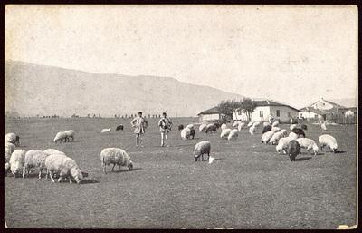 Овчари