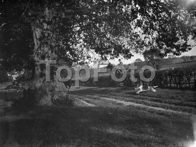 Jumping hedge . 1935