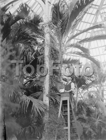 Tropical plants at Avery HiIl in London . 1937