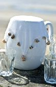 White jug with white fabric cover weighted with sea shells to keep insects out.  credit: Marie-Louise Avery / thePictureKitchen / TopFoto