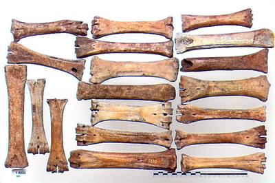 Image from object titled islægge eller skøiter