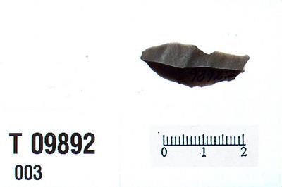 Image from object titled flekkepilespids