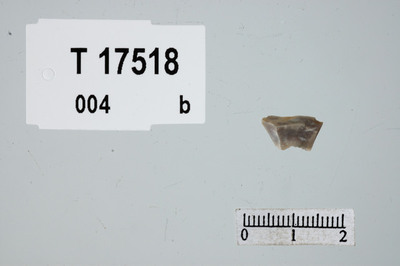 Image from object titled Mikrogravstikke