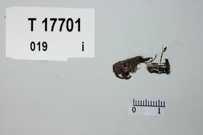 Image from object titled Surringstråd