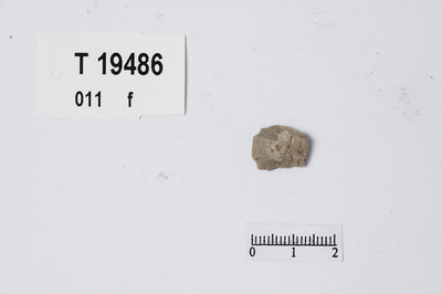 Image from object titled mikroflekke