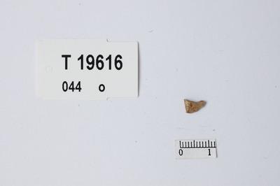 Image from object titled Splint