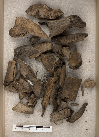 Image from object titled Osteologisk materiale