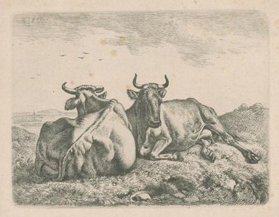 Ležiace kravy