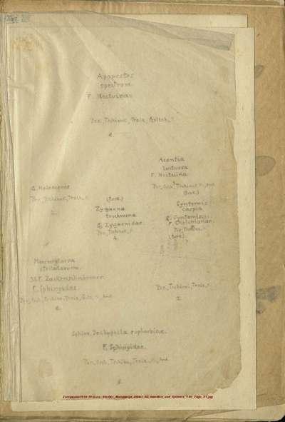 Image from object titled Kleiber Manuskript Bilder 02 - Insekten und Spinnen