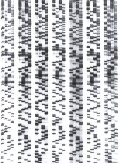 Image from object titled DNA sequencing. This method of DNA sequencing is called di-deoxy sequencing. It is used to determine the order of bases (A,C,G and T) in a piece of DNA using radioactively-labelled modified nucleotides. They are then separated by electrophoresis in a polyacrylamide gel and detected on x-ray film by a process called autoradiography.