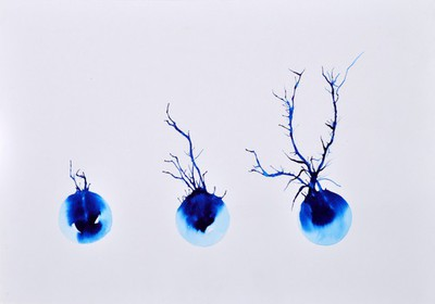 Image from object titled Neurone development, artwork