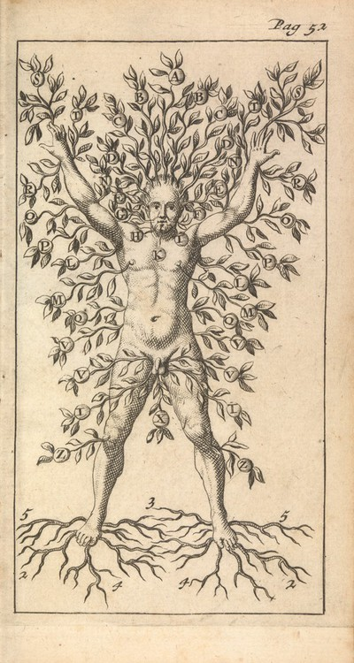 Image from object titled A man growing as a tree with branches, fruit and roots