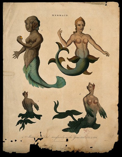 Image from object titled Three mermaids, one of them showing posterior and front view. Coloured engraving, 1817.