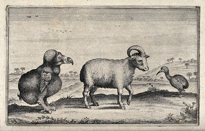 Image from object titled A dodo, a one-horned ram and a kiwi are standing in front of an exotic landscape. Etching.