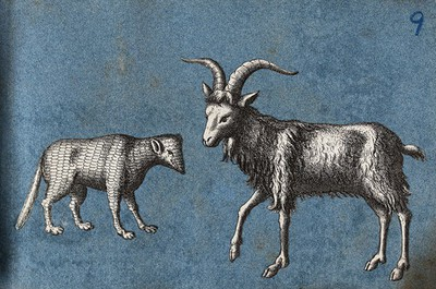 A goat and an unidentified animal  Cut-out engravings pasted
