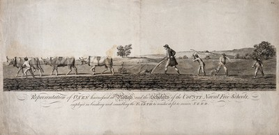 Image from object titled Agriculture: schoolboys variously employed ploughing, digging, and raking earth. Engraving.