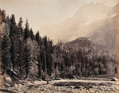 Image from object titled Kashmir: a mountain valley and forest. Photograph by Samuel