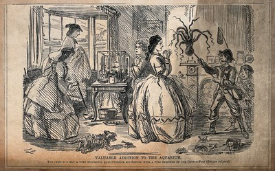 Image from object titled Two young boys have caught a cuttlefish and brought it home for their aquarium. The women are shocked, some crabs have escaped from a bucket, one is attacking the dog. Wood engraving by P. Swain.