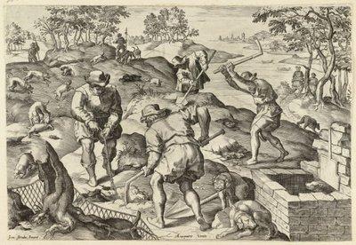 Dassenjacht. <br> Zesde prent van een genummerde, zesdelige prentenserie met jachttaferelen. <br> Gravure naar ontwerptekening van Johannes Stradanus; gesigneerd;           rechtsonder op de muur genummerd '.6.'; zonder...