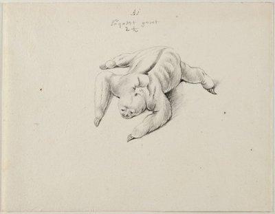 Luiaard (Bradypus variegatus (Schinz, 1825).<br> Grafiettekening, geannoteerd.<br> Watermerk: (fragment) staart en poten van dubbelkoppige adelaar<br>; NL-HlmNHA_53004650_01; Kennemerland NL-HlmNHA_53004650_01