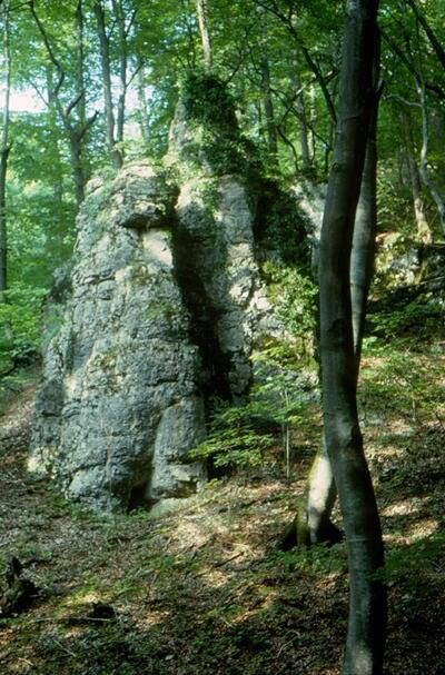 Image from object titled Fotografie (Dia) | Kueftal, Flüeli