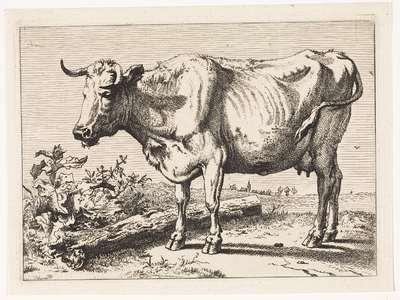 Koe met gedraaide hoorn; Het Bullenboekje